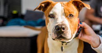 Tout savoir sur l'assurance responsabilité civile animale