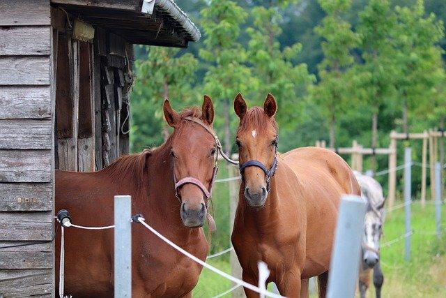 pension pour chevaux lot-et-garonne